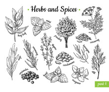 Herbs And Spices. Hand Drawn V...