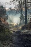 Dzik w lesie Fontainebleau - 164032955