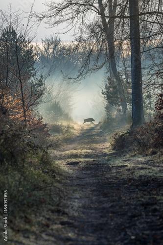Foto op Canvas Weg in bos Sanglier en forêt de Fontainebleau