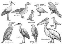 Collection Of Birds Illustrati...
