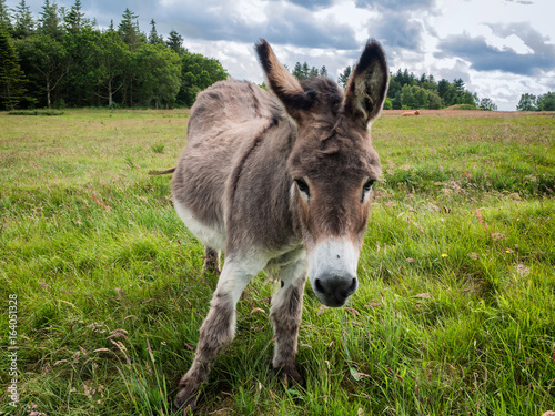 Donkey, nice and cure on a green field