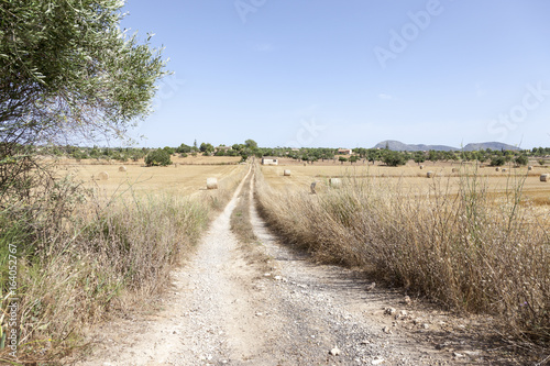 Fényképezés  Feldweg auf Mallorca Erntezeit