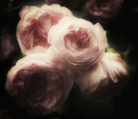Fototapeta Do sypialni Beautiful bouquet of pink roses on a dark background, soft and romantic glamourous filter, vintage flowers looking like an old painting