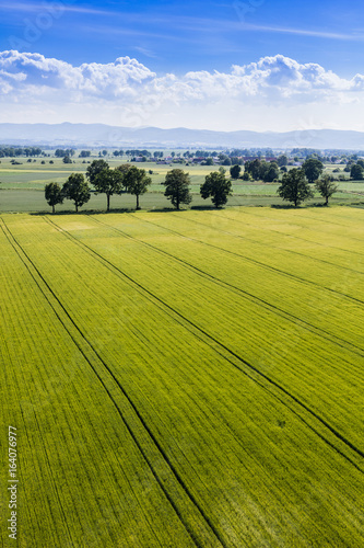 aerial view of the harvest fields Canvas Print
