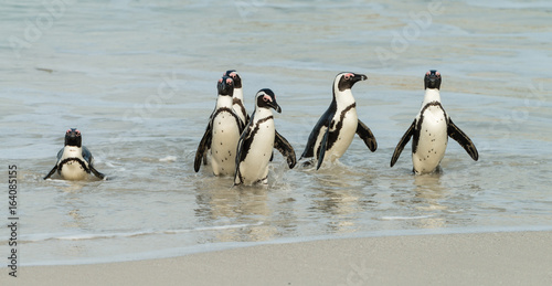 Tuinposter Pinguin Boulders Beach in Simonstown (South Africa) with Penguins