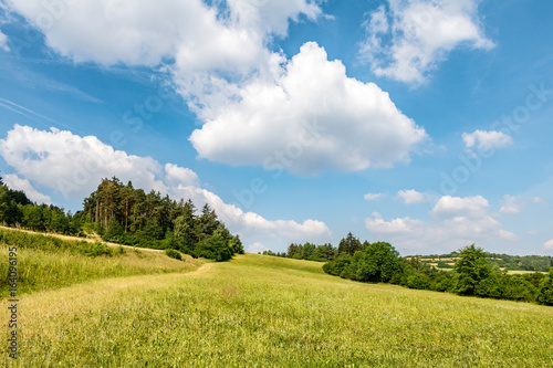 Tuinposter Blauw Summer landscape with green meadow, forest and blue sky