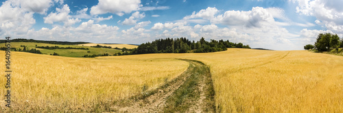 Foto op Aluminium Oranje Panoramic shot of summer countryside with dirt road between fields