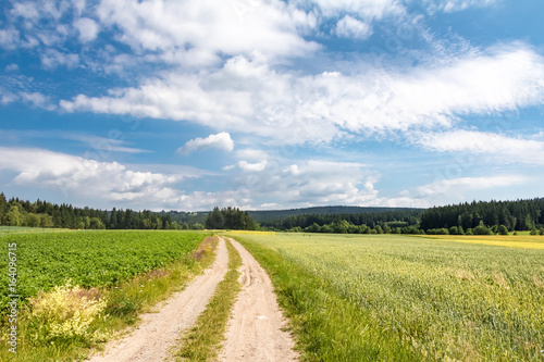 Poster Beige Dirt road through summer landscape with fields