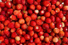 Background Wild Strawberry Collection. Vitamin Useful Tasty Berries. The Gifts Of Nature To Humans.
