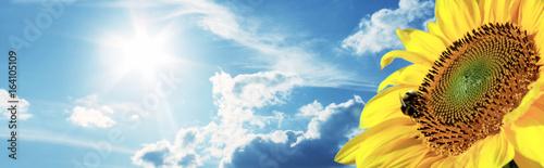 Plakat Piękny słonecznik z pszczołą