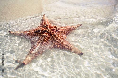 Photo Closeup Starfish