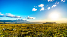 Sunrise Over The Western Cape ...