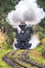 Steam Locomotive In Forest Rai...