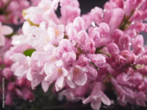 kwiaty-w-stylu-retro-w-duzym-zblizeniu