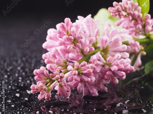 rozowe-kwiatki-w-stylu-vintage-na-ciemnym-tle