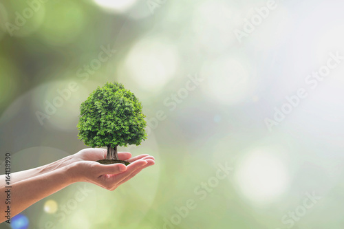 Foto  Sustainable environment and saving environmental ecosystem of forest concept wit