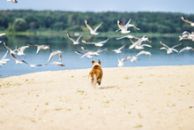 Dog Is Running And The Seagulls Are Flying