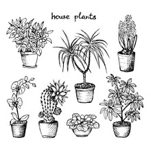 House Plants - Set Of 7 Hand-D...