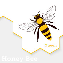 Honey Bee Vector Illustration ...