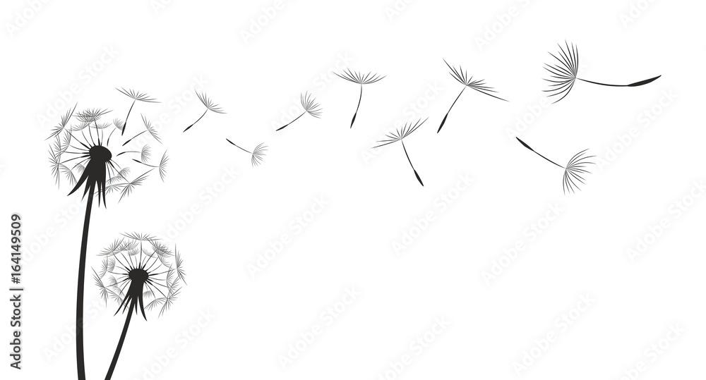 Fototapety, obrazy: Flower field dandelion.