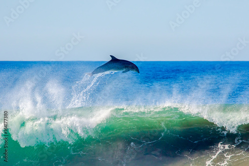 Dolphin Flyaway