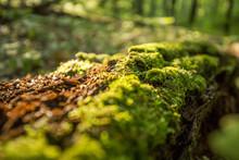 Moss And Rotting Log Close Up