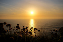 Scenics View Of Wild Flowers And Ocean During Sunset