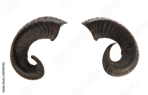 Fotografia Pair of ram horns