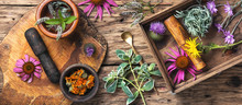 Set Healthy Herbs