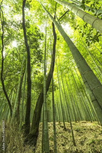Staande foto Bamboe Sagano bamboo park Kyoto