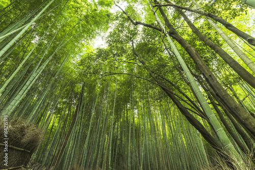 In de dag Bamboo Sagano bamboo park Kyoto
