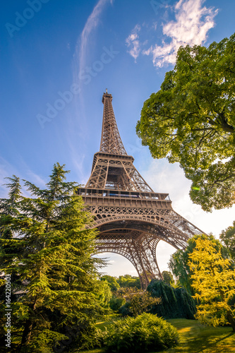 Eiffel tower among the trees. Plakat