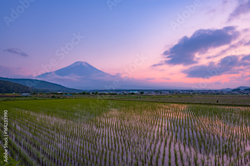 Carta da parati 富士山と水田