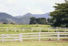 White Fence On The Farm