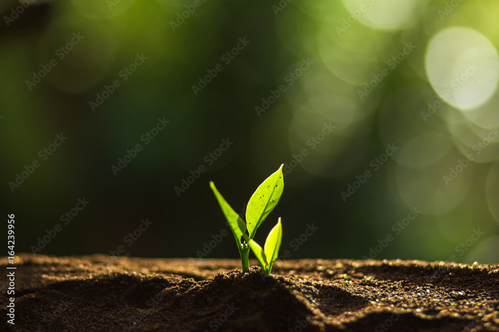Plant a tree in nature,coffee tree,fresh