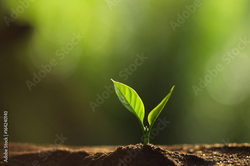 Foto op Canvas Planten Plant a tree in nature,coffee tree,fresh