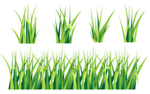 Tufts Of Grass. A Set Of Design Elements Of Nature. Vector Illustration Isolated On White Background. Summer Natural Grassy Green Elements Web Site Page And Mobile App Design Vector Element.