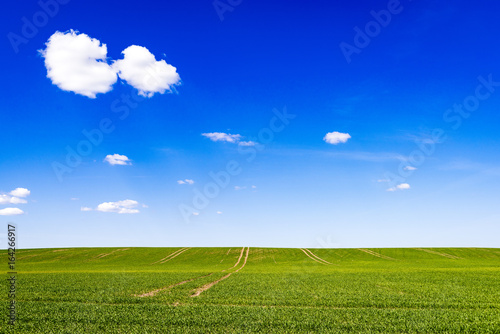 Tuinposter Donkerblauw beautiful green fields under blue sky in summer