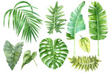Set of tropical watercolor leaves - 164279334