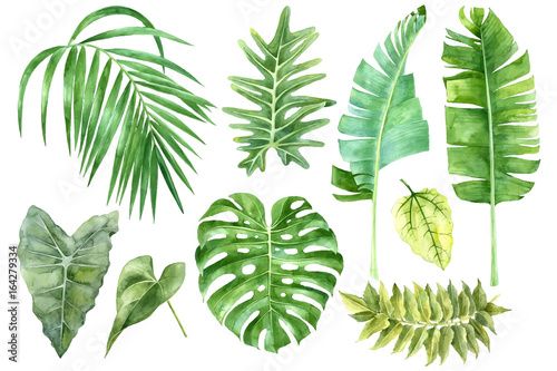Obraz na plátne  Set of tropical watercolor leaves