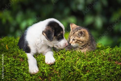 Little puppy with a little tabby kitten Canvas-taulu