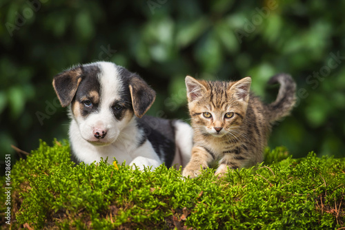 Valokuvatapetti Friendship of little puppy with a little tabby kitten