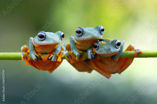 Tuinposter Kikker Tree frog, frogs on branch