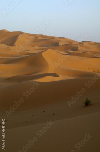 Poster Afrique desert