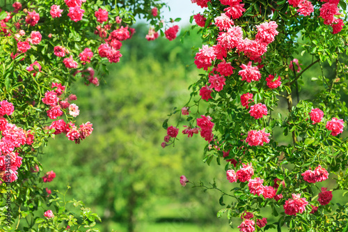 La pose en embrasure Jardin summer garden