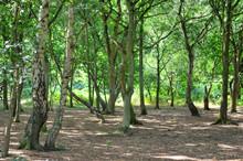 A Wide Sunlit Footpath Passes ...
