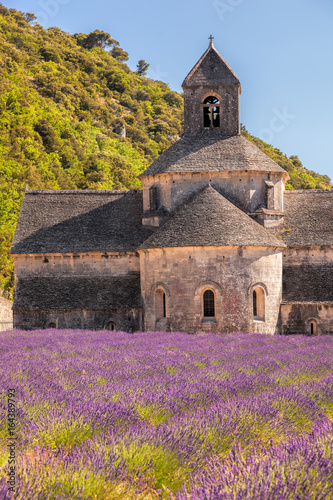 Fototapeta Lavender fields with Senanque monastery in Provence, Gordes, France