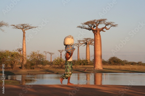 Allée des baobabs Canvas Print