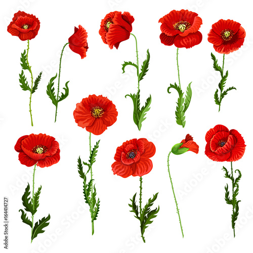 vector-isolated-icons-of-poppy-flowers