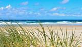 Fototapeta Fototapety z morzem - herbes poussant sur les dunes d'une plage landaise